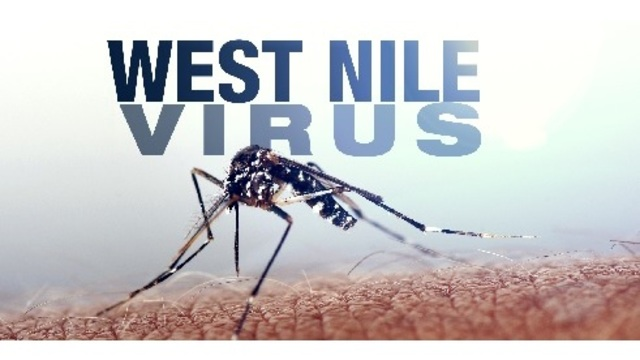 West Nile virus detected in Chatham County, Mosquito Control says