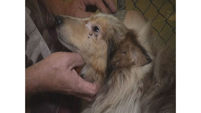 Dozens of dogs and cats rescued from breeder in Colleton County