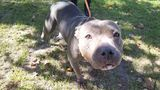 Meet this week's Perfect Pets up for adoption at Humane Society