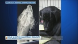 Hampton Co. dog found alive on the side of the road with multiple shotgun wounds